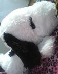 岡山県 岡山市のセクキャバの和遊 夜桜 -よざくら-に在籍のひめ(昼、夜の部)