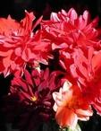 岡山県 岡山市のセクキャバの和遊 夜桜 〜よざくら〜に在籍のあい(昼、夜の部)