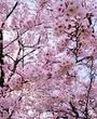倉敷・水島にあるキャバクラのくらぶ伊太利夜に在籍のはづきのページへ